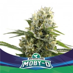 Moby -D XXL Auto BSF Seed
